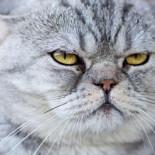 ¿Qué piensan los gatos de nosotros?