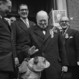 La salud del bulldog no mejorará: su genética ha llegado a un punto de no retorno