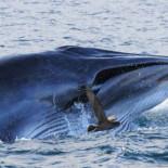 Cuando los mamíferos llegaron al mar necesitaron algunos trucos para comer  sus presas submarinas 6dc2fad47317