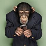 ¿Cómo un mono ganó más en 10 años en el mercado de valores que algunos profesionales?