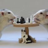 ¿Por qué juegan los animales? [ENG]