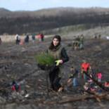 Después de los incendios mortales, el bosque más antiguo de Portugal renace de las cenizas [fra]