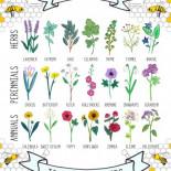Las abejas se están extinguiendo. Listado de plantas que debemos sembrar para ayudarlas