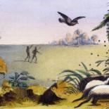 El pájaro que guía a humanos y animales hasta la miel a cambio de las sobras